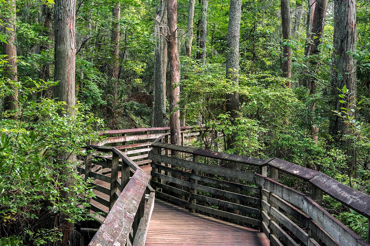 A boardwalk on the Bald Cypress path in First Landing state park, Virginia Beach, Va,